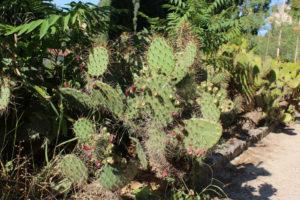 botanique-montpellier