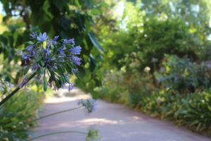 jardin-plantes