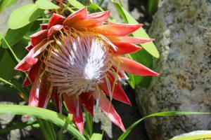 fleur-bambouseraie-anduze