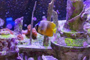 poisson-seaquarium