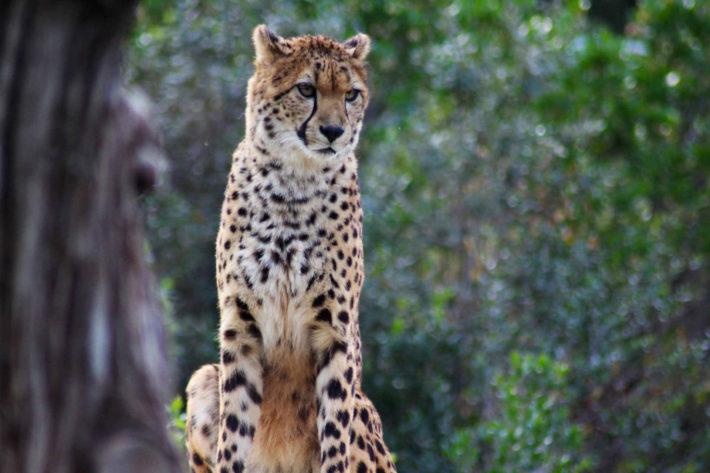 Zoo Montpellier