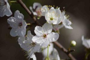Fleurs Randonnée